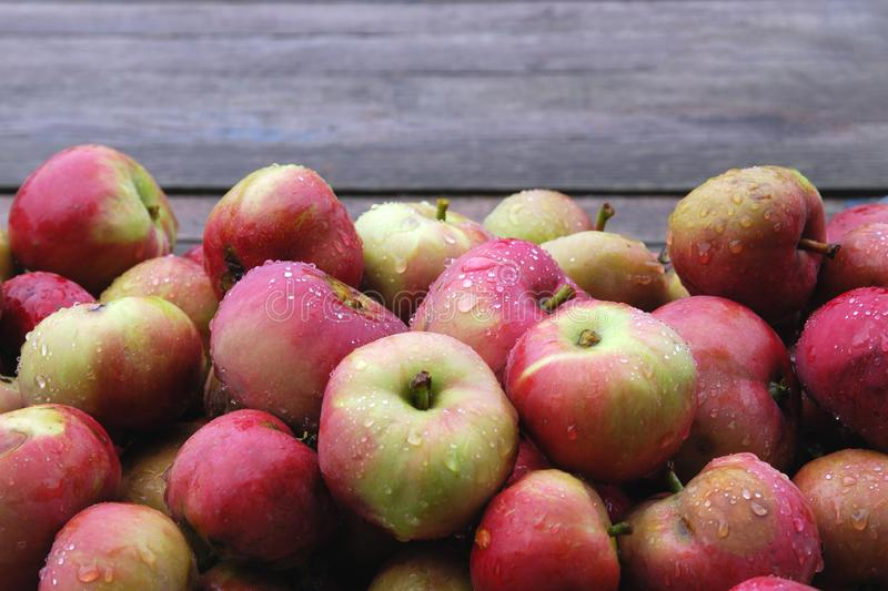 Food background of ripe apples pile wet from rain against wooden backdrop. royalty free stock photos