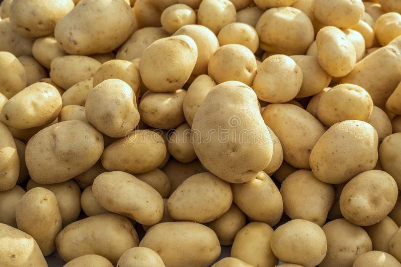 Food background of washed Organic potatoes on a market stall. Weekly spanish marketplace royalty free stock image