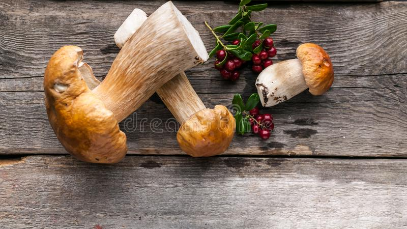 Food banner Forest wild mushrooms and berries on a rustic wooden background. Close-up. Top view. Copy space royalty free stock image
