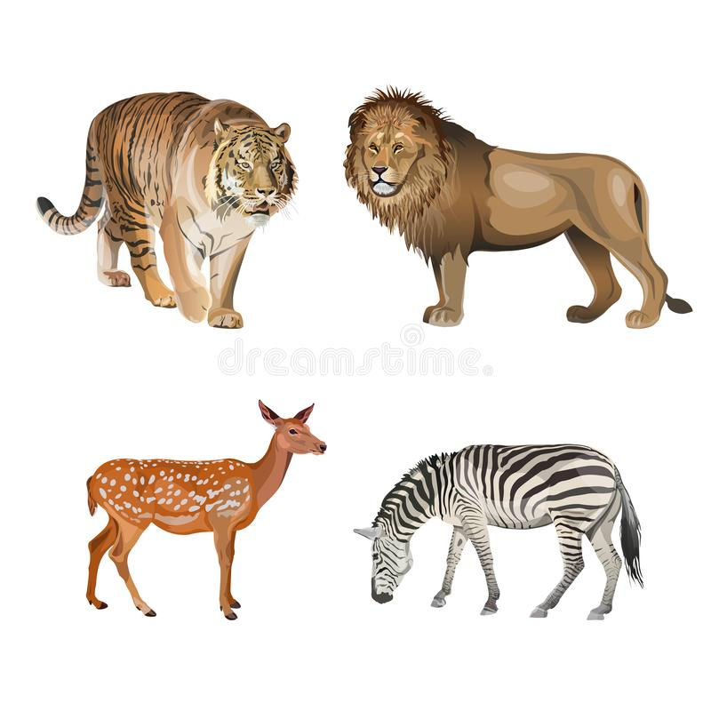 Food chain animals. Predators and herbivores. Tiger, lion, zebra and deer. Vector illustration isolated on white background royalty free illustration