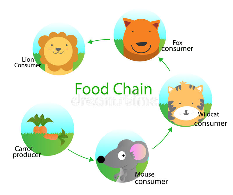 Food chain. Cartoon vector design vector illustration