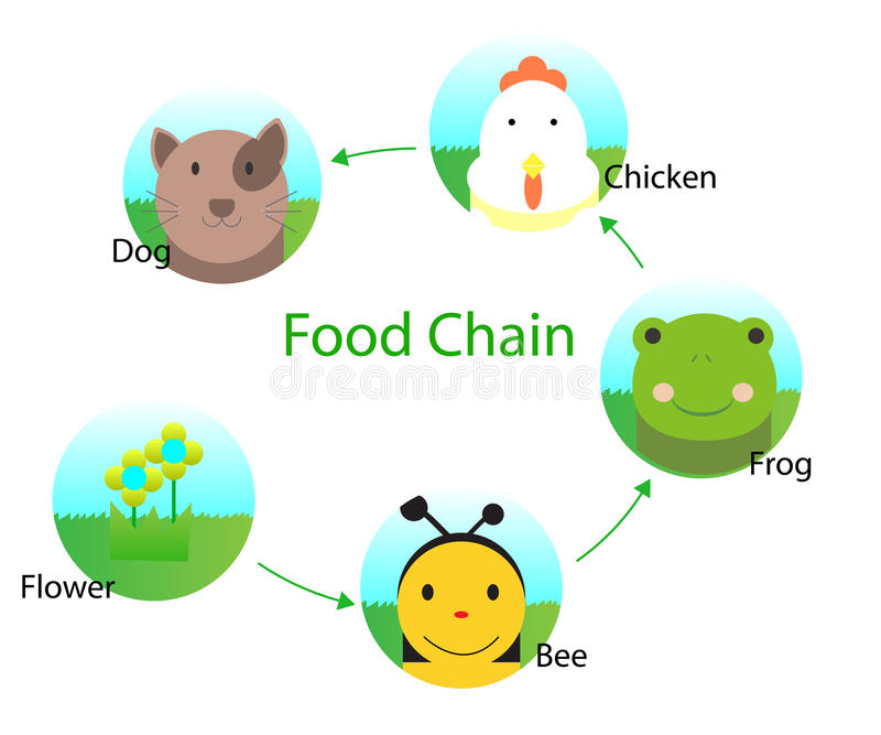 Food chain. Cartoon vector design royalty free illustration