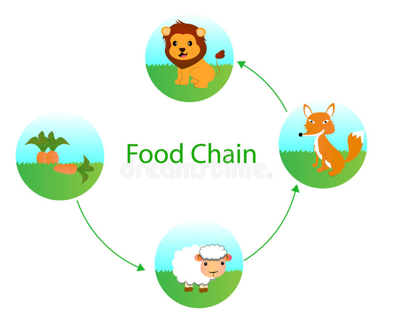 Food chain. Cartoon vector design stock illustration