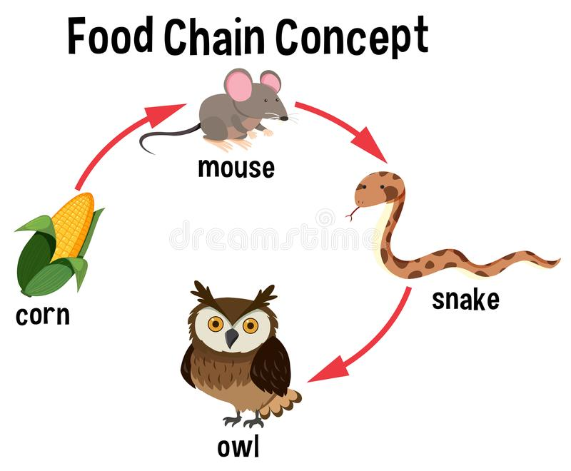 Food Chain concept diagram royalty free illustration