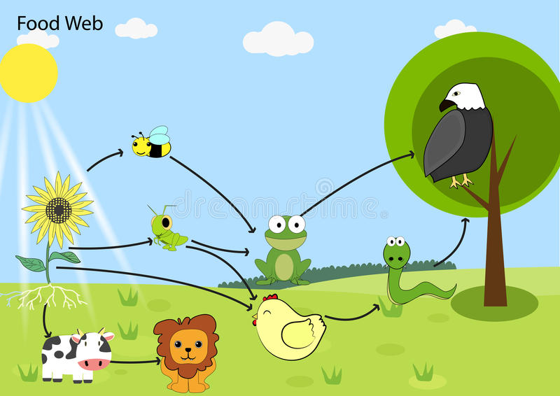 Food chain royalty free illustration