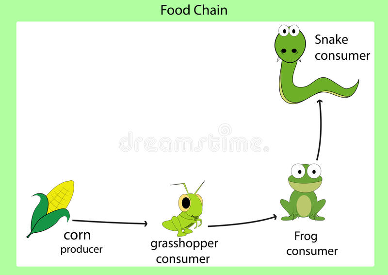 Food chain. Vector illustrator and computer design vector illustration