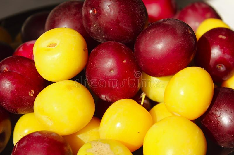 Food concept. Summer background. Colorful fresh plum. Ripe juicy plums. stock photography