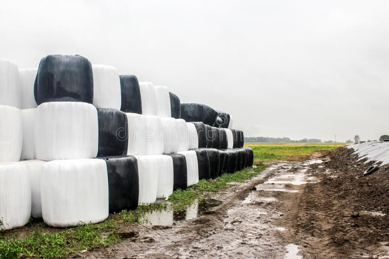 Round silage bales wrapped in a black and white membrane and laid like a pyramid. royalty free stock photo