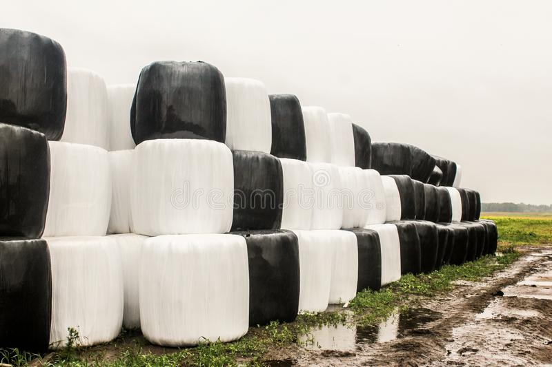 Round silage bales wrapped in a black and white membrane and laid like a pyramid. stock images