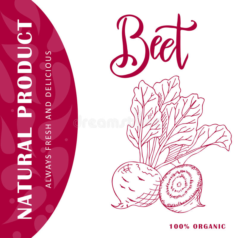 Food design with vegetable. Hand drawn sketch of beet. Organic fresh product for card or poster design for cafe, market. Colorful vector illustration vector illustration