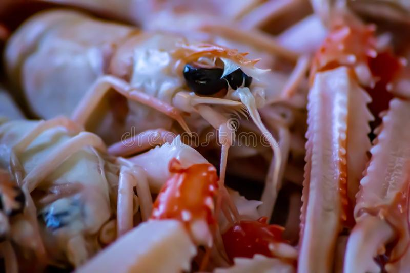 Food detail. shellfish ready to be eaten raw. scampi. one of the most delicious summer foods.  stock photo