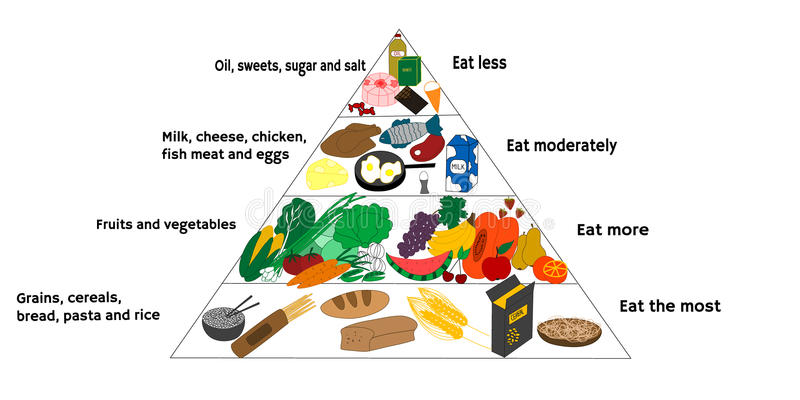 Food diagram. Vector illustration of food diagram and healthy diet royalty free illustration
