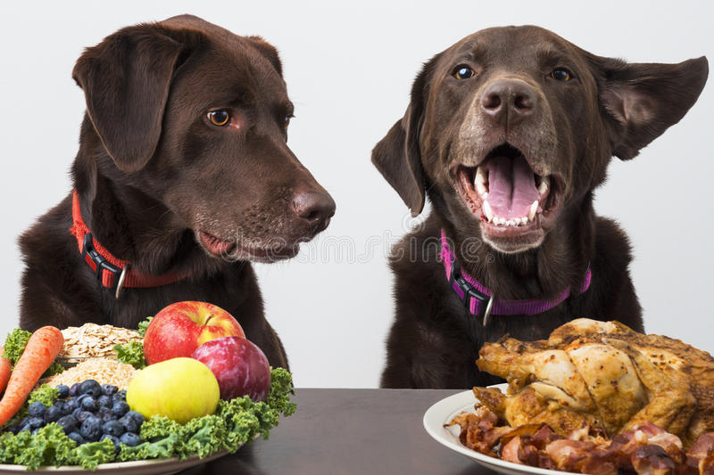 Food diet for pets. Dogs with choice of food diet stock image