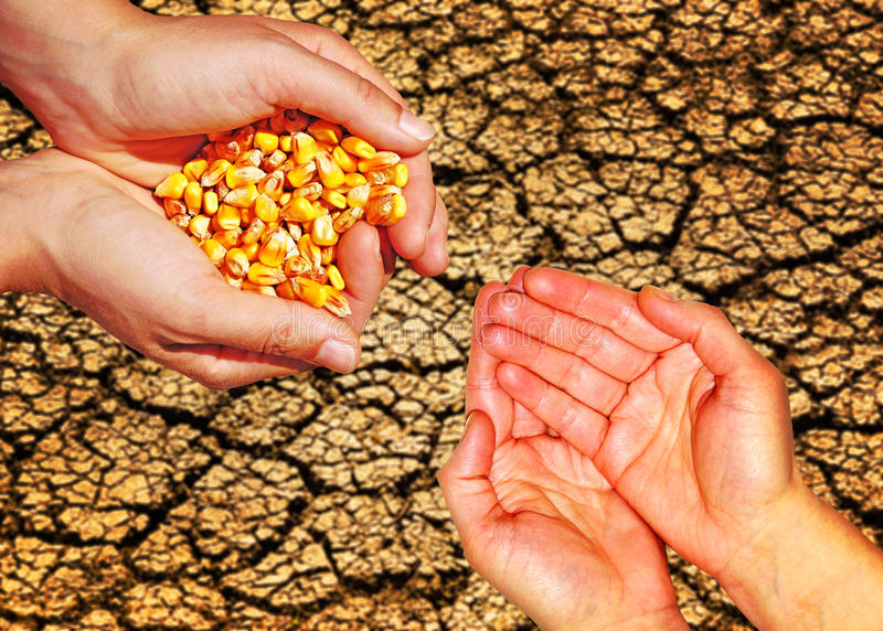 Food aid help. Food help, human hands giving corn seeds to empty human hands royalty free stock image
