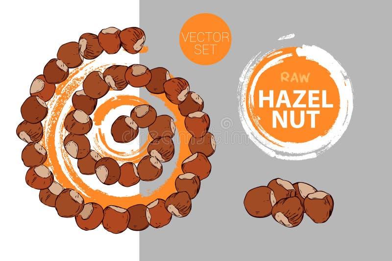 Spiral of hazelnuts with orange brush stroke circle on background. Cartoon nuts helix. vector illustration