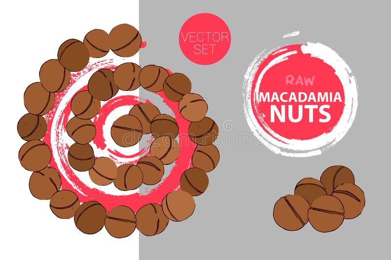 Spiral of macadamia nuts. Isolated hand drawn nuts. Raw macadamia nut colorful label royalty free illustration