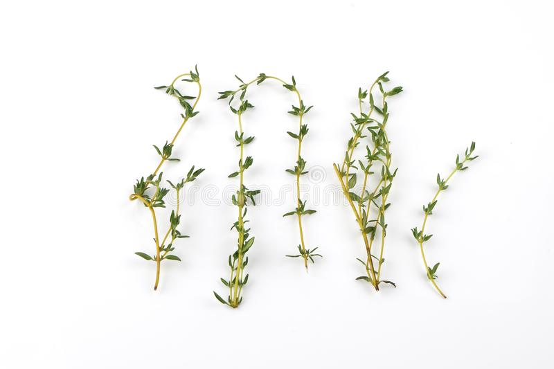 Thyme. Food, Ingredient, Raw Food, Seasoning, Thyme stock photo