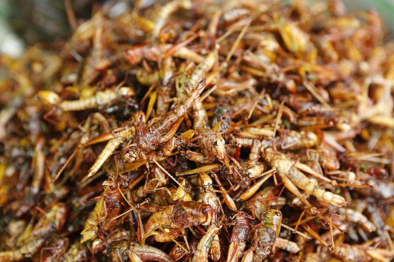 Food insect Cambodia. Cambodians and more generally South eastern Asians are enjoying insects crickets, cockroaches, worms, etc. as food. They consume them dried royalty free stock photos