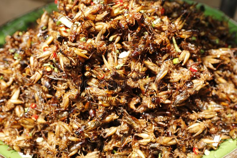 Food insect Cambodia. Cambodians and more generally South eastern Asians are enjoying insects crickets, cockroaches, worms, etc. as food. They consume them dried stock photos