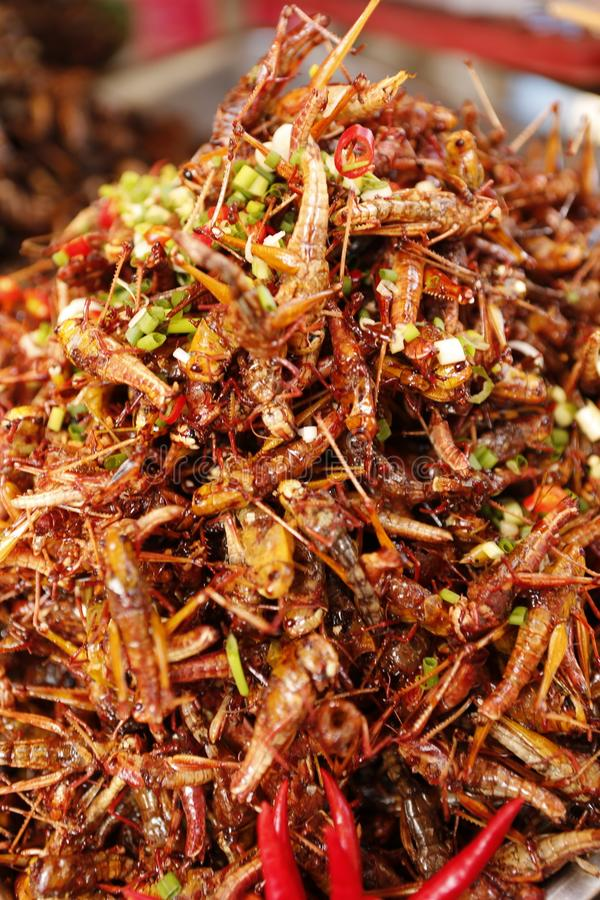 Food insect Cambodia. Cambodians and more generally South eastern Asians are enjoying insects crickets, cockroaches, worms, etc. as food. They consume them dried stock photo