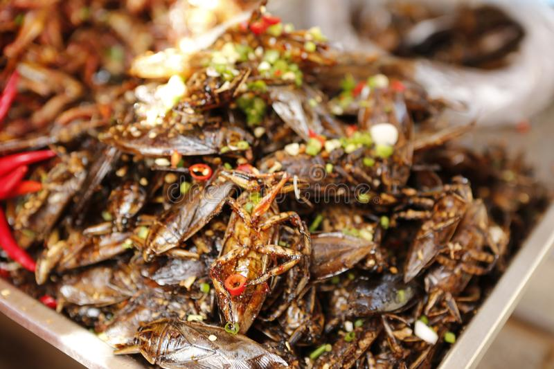 Food insect Cambodia. Cambodians and more generally South eastern Asians are enjoying insects crickets, cockroaches, worms, etc. as food. They consume them dried royalty free stock photography