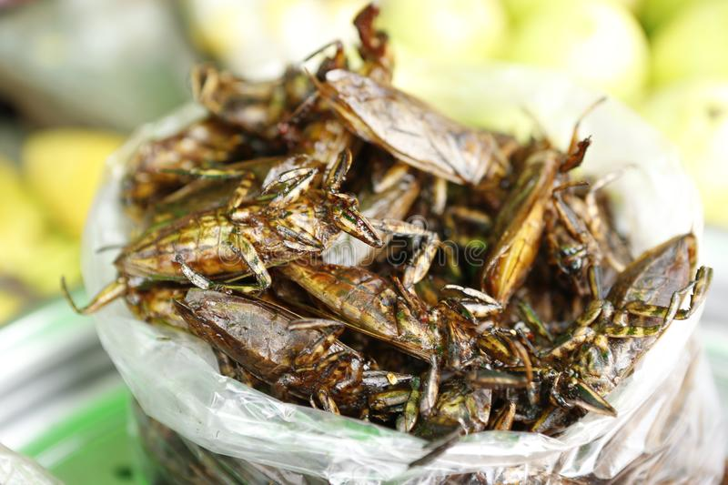 Food insect Cambodia. Cambodians and more generally South eastern Asians are enjoying insects crickets, cockroaches, worms, etc. as food. They consume them dried stock photography