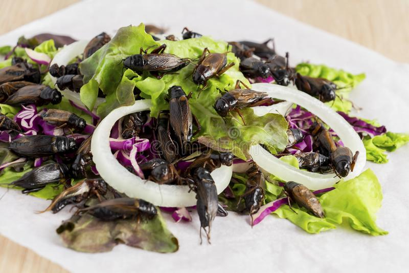 Food Insects: Crickets insect for eating as food items deep-fried on healthy salad vegetable, it is good source of protein edible. And delicious for future stock photography