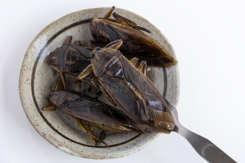 Food Insects: Giant Water Bug for eating as food. Insect items cooking deep-fried snack on plate with fork on white background, it royalty free stock images