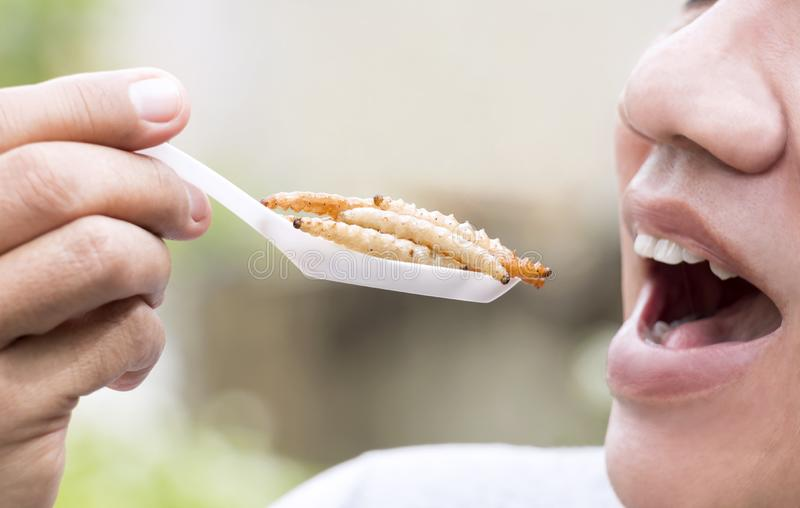 Food Insects: Man eating bamboo worm insect on spoon. Bamboo Caterpillar is good source of protein edible and delicious for future stock image