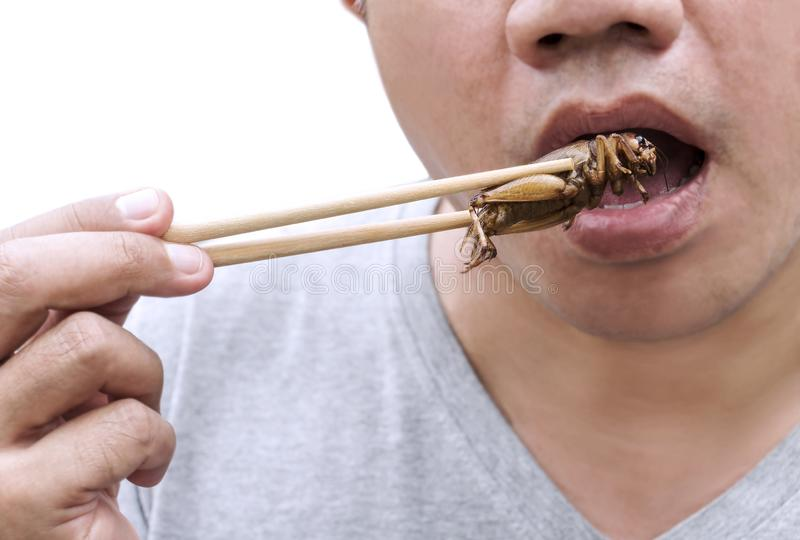 Food Insects: Man`s hand holding chopsticks eating Cricket insect deep-fried for eat as food snack on white background, it is goo. D source of meal high protein stock photo