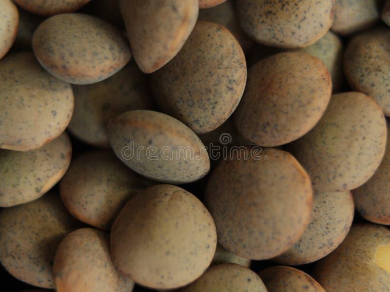 Food Food Legume lentil stew Delicious round tasty. Lentejas fondos royalty free stock images