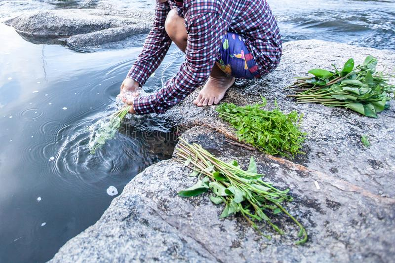 Food in nature, asian female washing wild edible plants in water stream, fresh fern and water spinach on the rock along a stream. Blurred motion. Mae Wong stock photography