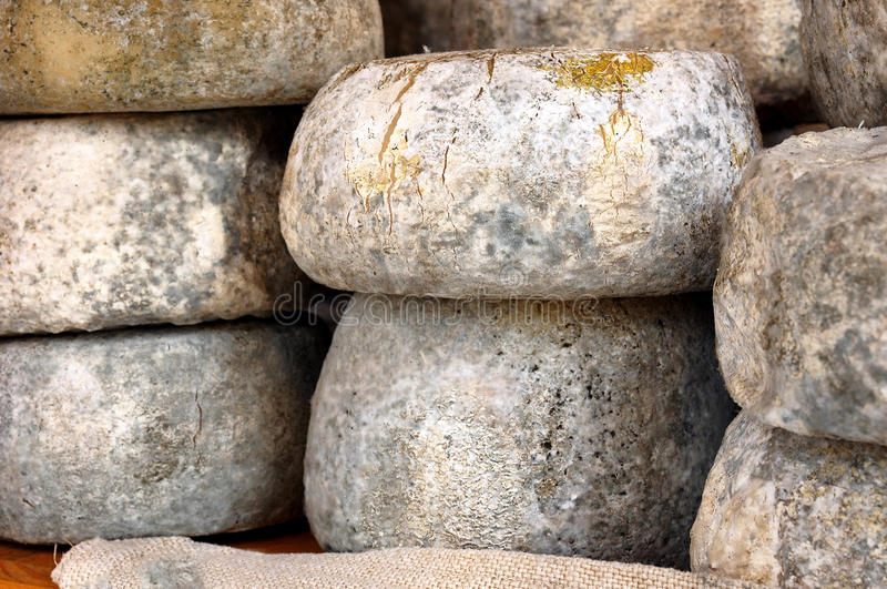 Food. Pecorino cheese wheels. Pecorino cheese wheels with mold on the skin for a better and longer conservation royalty free stock photo
