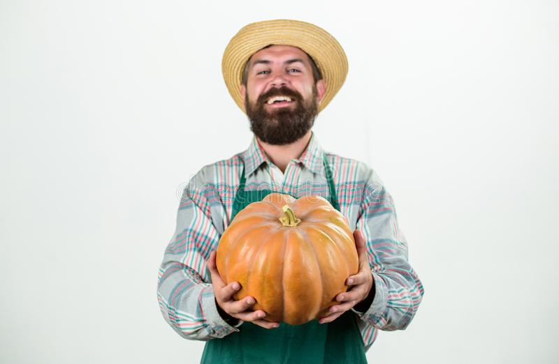 Food photography. useful vegetables. rich autumn crop. seasonal vitamin. organic natural food. happy halloween. healthy. Product. man with pumpkin. bearded man royalty free stock photo
