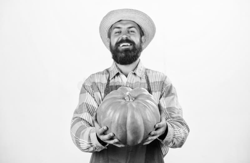 Food photography. useful vegetables. rich autumn crop. seasonal vitamin. organic natural food. happy halloween. healthy. Product. man with pumpkin. bearded man royalty free stock photos