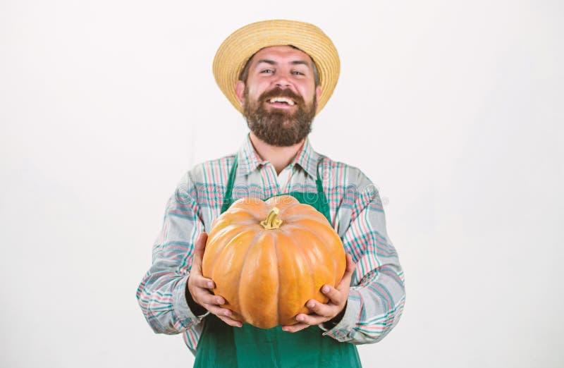 Food photography. useful vegetables. rich autumn crop. seasonal vitamin. organic natural food. happy halloween. healthy. Product. man with pumpkin. bearded man stock photography