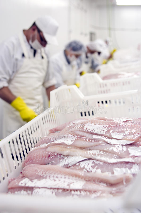 Food processing line stock photos