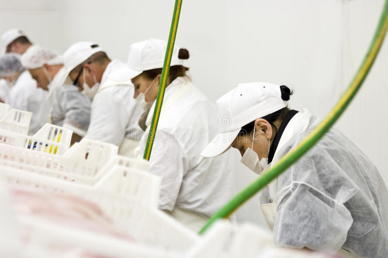 Food processing line stock photo