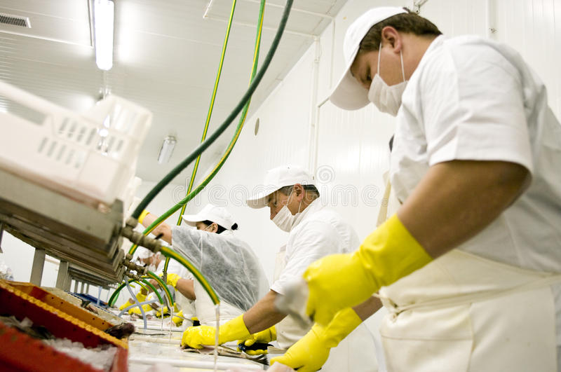 Food processing workers royalty free stock photo