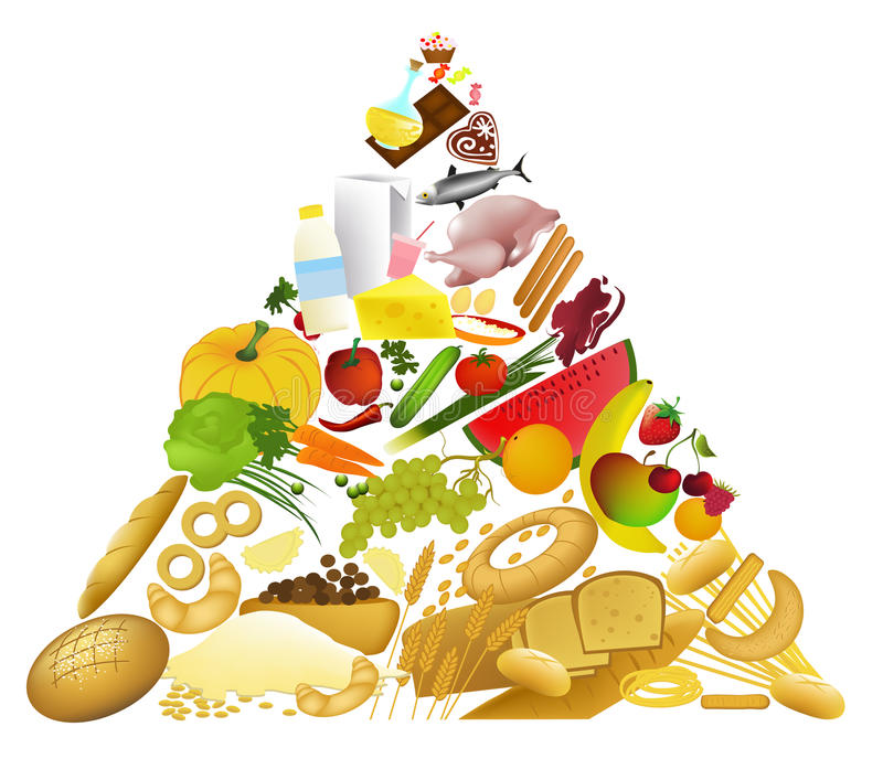Download Food pyramid stock vector. Image of illustration, care - 14487258