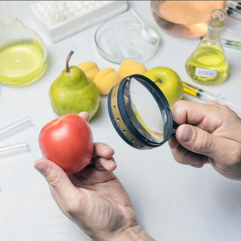 The food safety inspector is testing fruit from the market. Holds a magnifying glass in his hand. The food safety inspector is testing fruit from the market stock photography