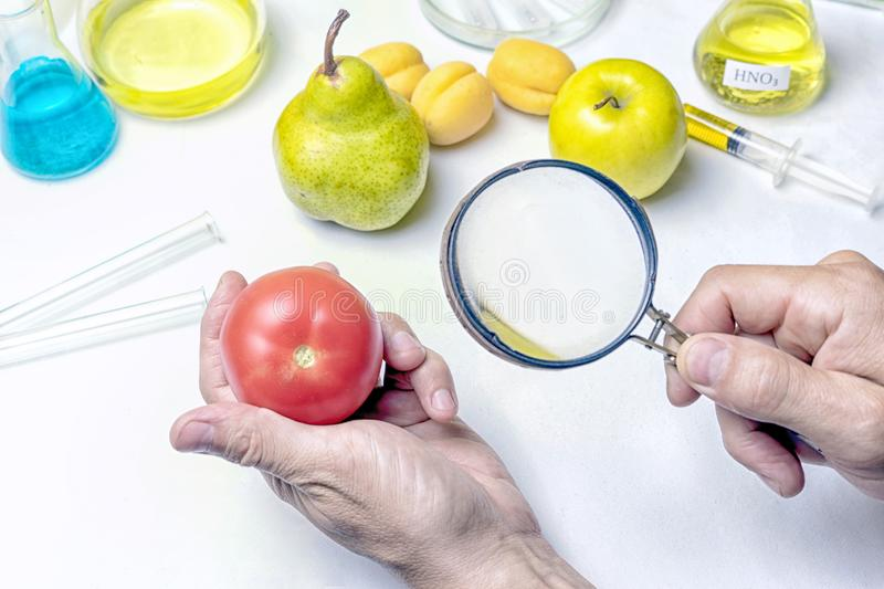 The food safety inspector is testing fruit from the market. Holds a magnifying glass in his hand. The food safety inspector is testing fruit from the market royalty free stock photography