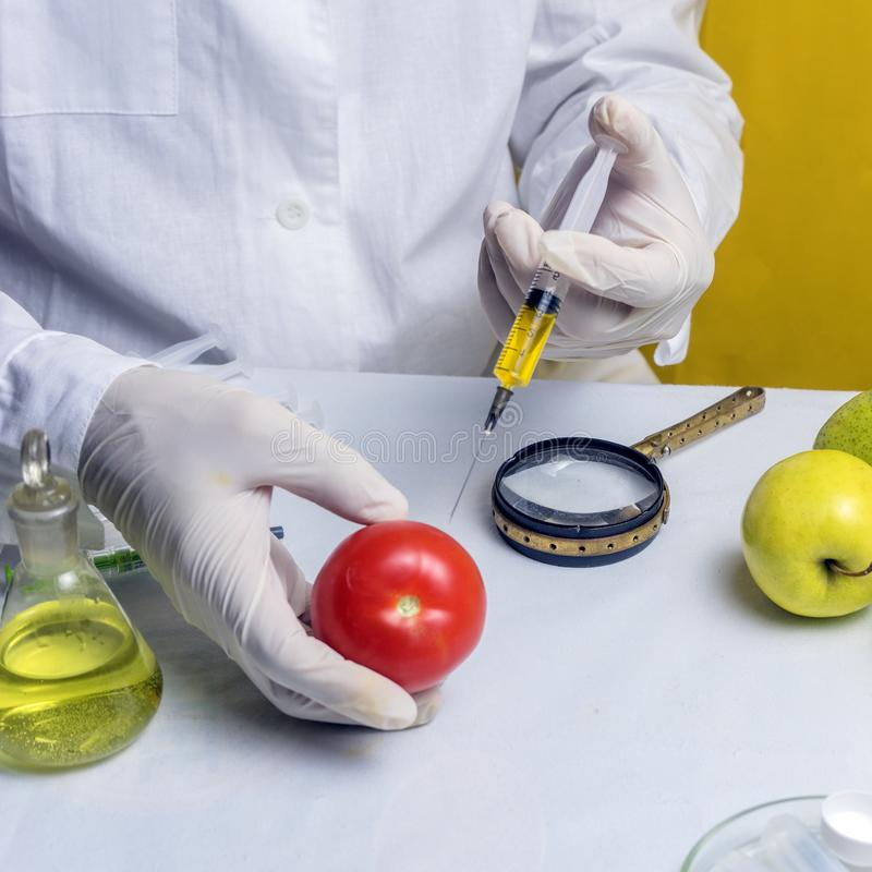 Food safety laboratory procedure, lab assistant makes a shot in the tomato. Close up royalty free stock image