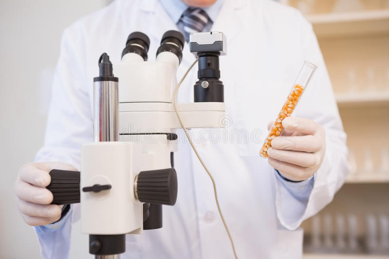 Food scientist holding test tube with seeds royalty free stock photos