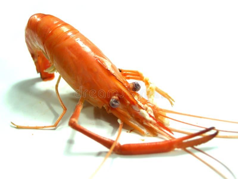 Food shrimp 5. A photo of close-up of food shrimp stock photos