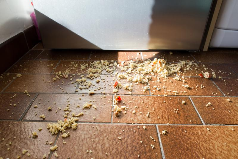 Food spilled on the kitchen floor. In front of the fridge stock images