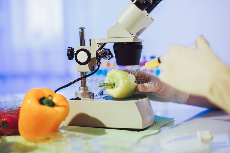 Food testing in the laboratory. GMO food. royalty free stock photos