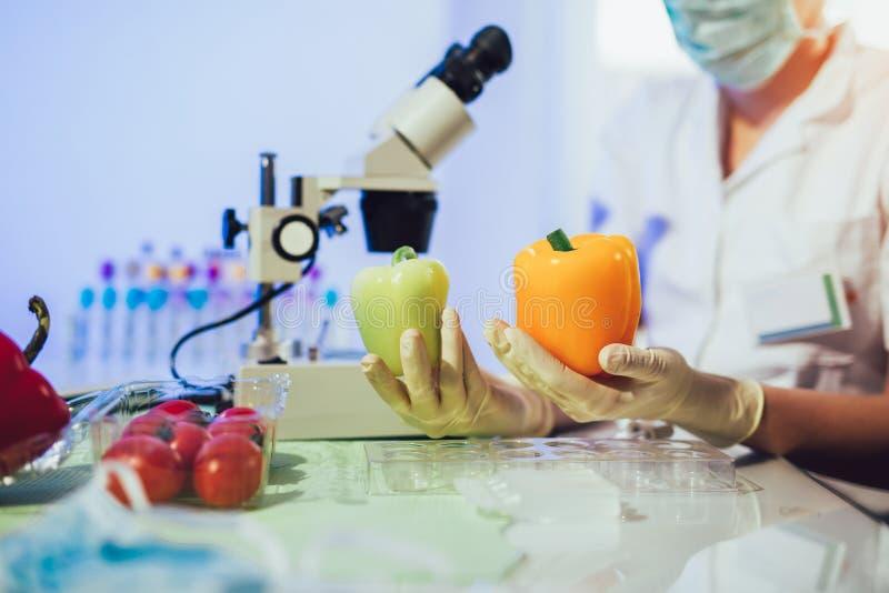 Food testing in the laboratory. GMO food. stock image