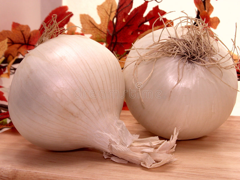 Food: White Onions royalty free stock photography