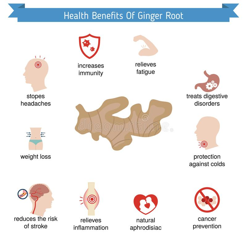 Foods infographics. Ginger root. vector illustration